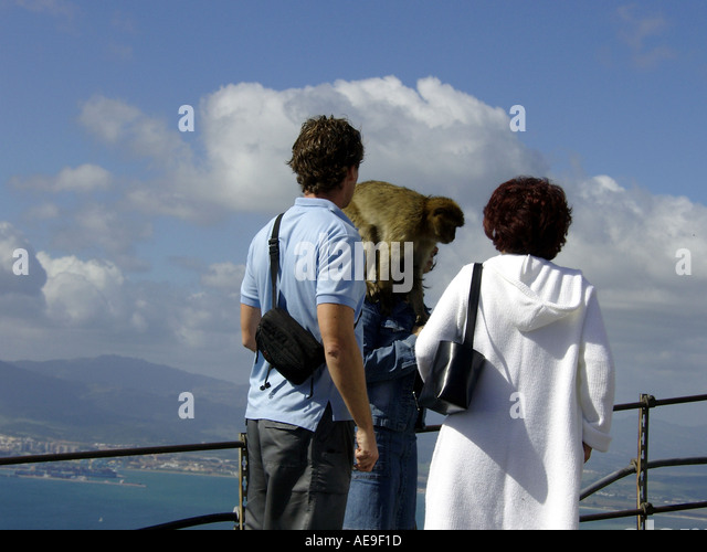 Gibraltar Ape Sitting on Woman s Head Gibraltar Ape Sitting on Woman s Head  Barbary Macaque Macaca sylvanus L ape - Stock Image