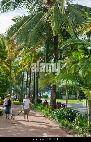 Australia, Queensland. An avenue of coconut palms at Port Douglas, an attractive port town in northern Queensland. - Stock Image
