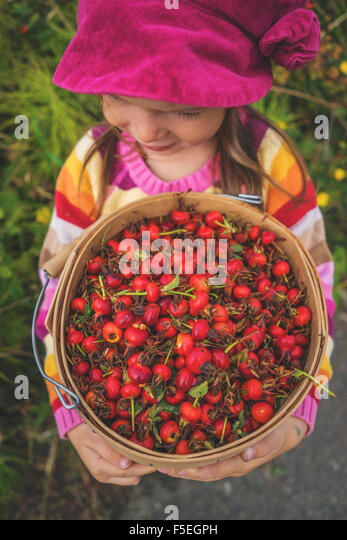 Girl holding a bucket of freshly picked rosehips - Stock Image