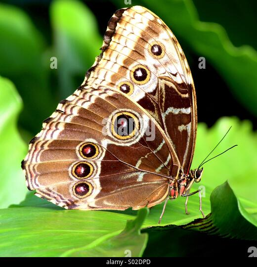 Exotic Butterfly enjoying the warmth of the rising sun - Stock Image