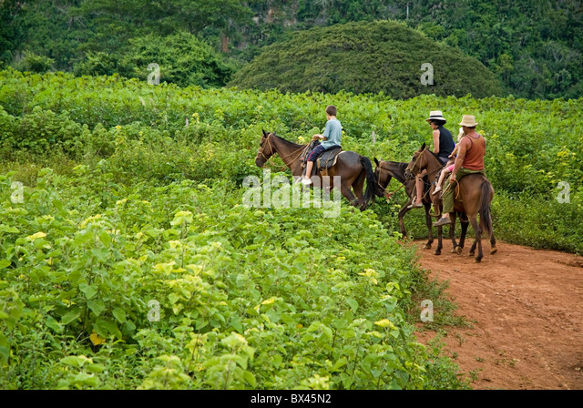 Family horseback riding in the countryside along with their Cuban guide, Vinales valley, Cuba. - Stock Image