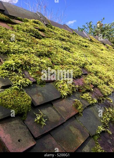 Bright green moss on red clay tile roof - Stock Image