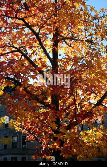 Vibrant tree foliage illuminated by afternoon sunlight. - Stock Image