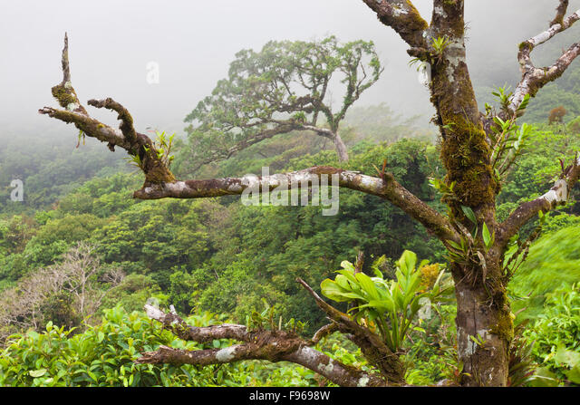 Mist in Omar Torrijos national park, Cocle province, Republic of Panama. - Stock-Bilder