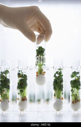 Person holding test tube containing cress seedlings - Stock Image