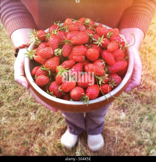 Woman holding large bowl of freshly picked ripe strawberries - Stock Image