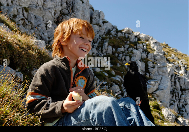 Cheeky Alpine Chough begging child for food, Karwendel Nature Park, on the summit of Mt Karwendel, near Mittenwald, - Stock Image