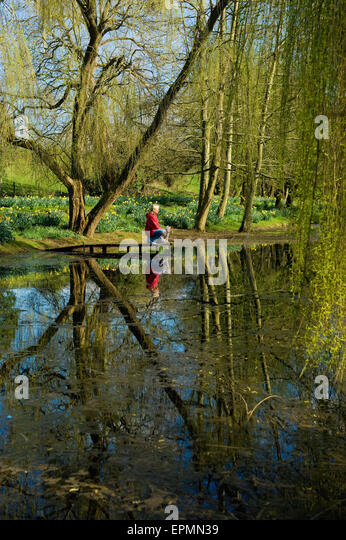 A woman and a small dog by a lake under a large weeping willow tree. - Stock Image
