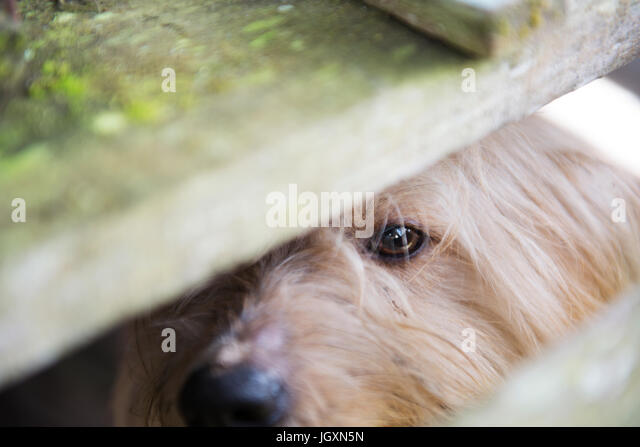 A dog desire for freedom - Stock Image