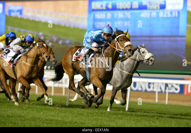 Dubai, UAE. 22nd January, 2015. UMGIYO ridden by Christophe Soumillon wins the  Gulf News Classifieds  Handicap - Stock Image