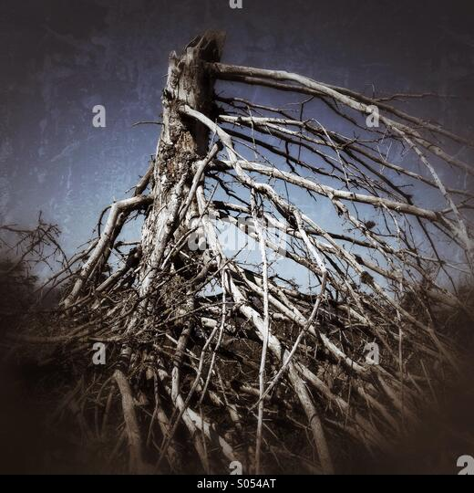 Dead tree - Stock Image