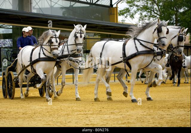 Horse drawn chariot at Yeguada de la Cartuja stud, Hierro del Bocado, Jerez de la Frontera, Andalucia, Spain - Stock Image
