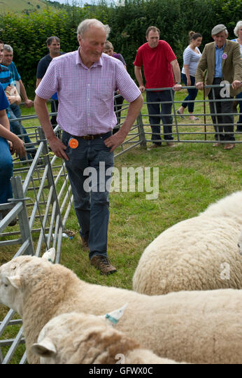 Judging of sheep at Gwenddwr Show, Gwenddwr, near Builth Wells, Powys, Wales, UK - Stock Image
