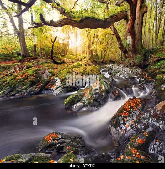 Tollymore Forest park, Northern Ireland. - Stock Image