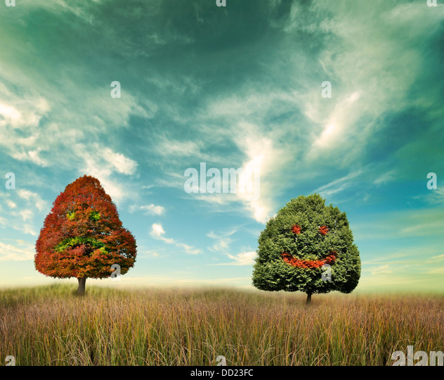 Two Trees On A Field With Happy And Unhappy Faces - Stock Image