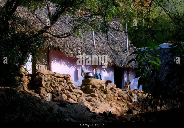 Humble village thatched hut bathed in morning sunlight on Arunachala sacred hill Tiruvannamalai South India - Stock Image