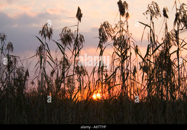 Everglades National Park sunrise seen through tall grass - Stock Image
