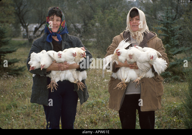Moldova Eastern Europe Romanesti former collective privatized corporation residents women chickens - Stock Image