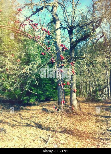 Branch in woods with red berries - Stock Image