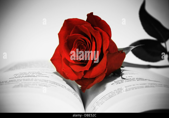 Open book with red rose, still life in black and white and red rose selective,poetic,romantic,love,photograph,creative,flower - Stock Image