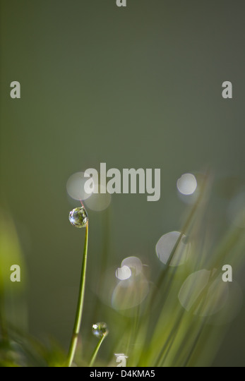 Dew and water droplets on grass in La Amistad national park, Chiriqui province, Republic of Panama. - Stock-Bilder
