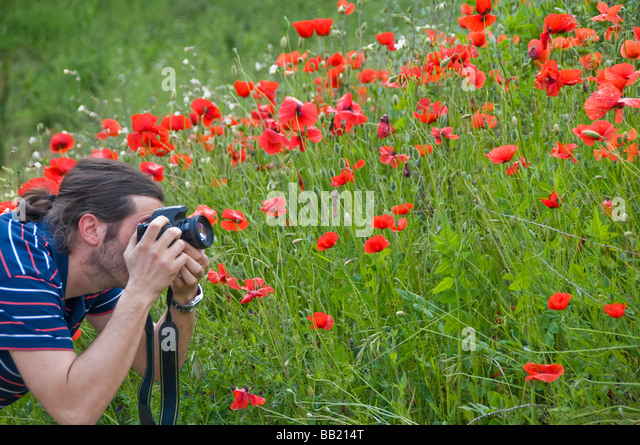 Photographing a red poppy flowers field - Stock Image