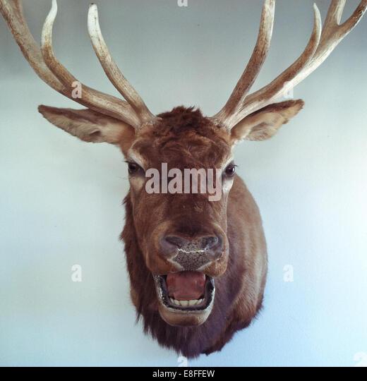 Animal head, Colorado, United States of America|38.7251776,-105.6077167 - Stock Image