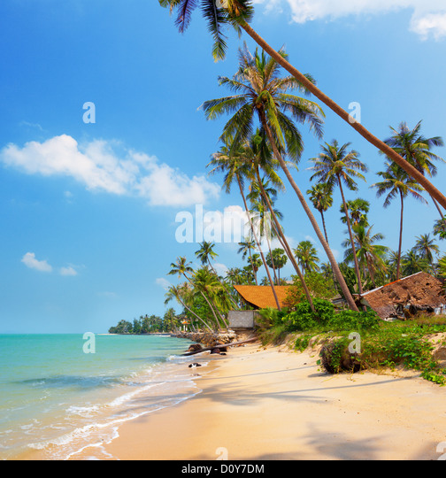 tropical beach with coconut palm - Stock Image