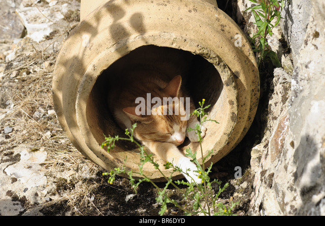 A ginger cat in a disused chimney pot resting in the sunshine - Stock Image