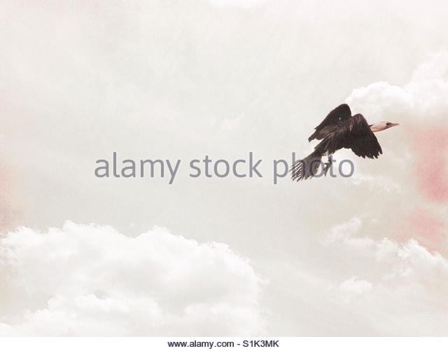 bird Flying - Stock Image