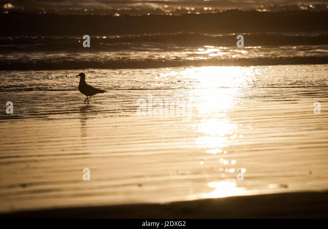 Seagull0090   - Stock Image