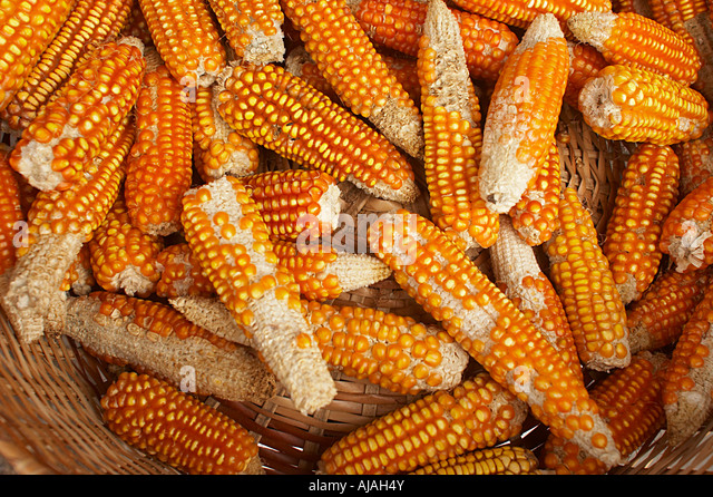Dried corn for sale in the central market of paramaribo suriname