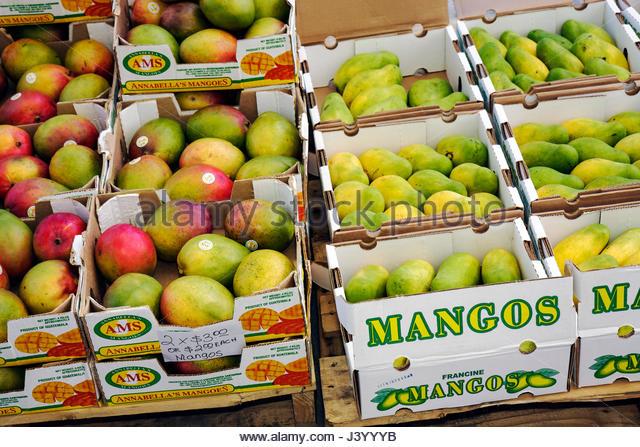 Miami Beach Florida Lincoln Road pedestrian mall farmers market cardboard box crate mangos tropical fruit import - Stock Image