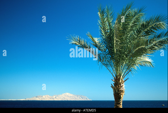 View of Tiran Island Straits of Tiran Gulf of Aqaba from shoreline with palm tree Sharm el Sheikh Egypt Red Sea - Stock Image