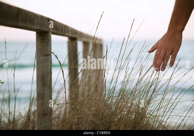 Person's hand touching dune grass - Stock Image