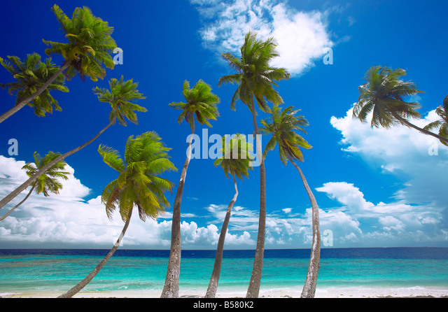 Empty beach and palm trees, Maldives, Indian Ocean, Asia - Stock Image