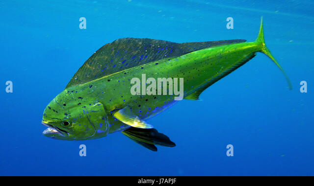Dolphin Market Stock Photos & Dolphin Market Stock Images - Alamy