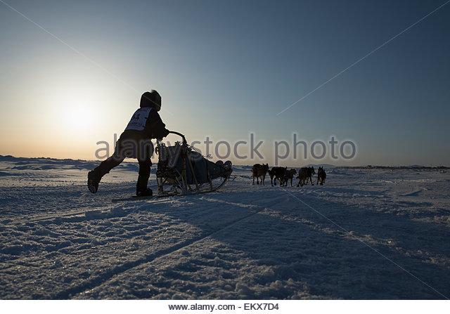 Jessica Hendricks runs on the Bering Sea several miles before the finish line in Nome , 2013 Iditarod, Arctic Alaska - Stock Image