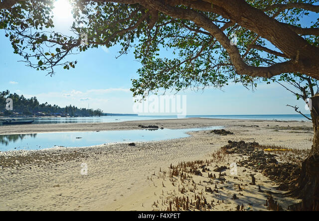 Serene atmosphere under the tree by the beach - Stock Image