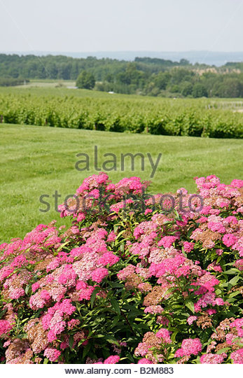 Michigan Traverse City Old Mission Peninsula Chateau Grand Traverse winery vineyard hill grape agriculture viticulture - Stock Image