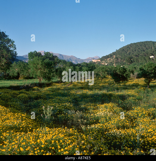 Countryside in the south west of the island of Mallorca, Balearic Islands, Spain - Stock-Bilder