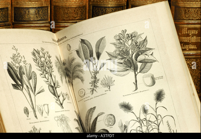 Illustrations of useful plants in a volume of an old edition of Meyers lexicon - Stock-Bilder