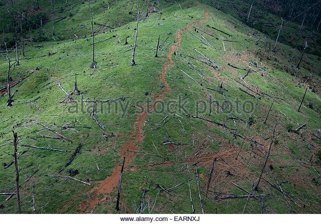 Deforestation of hillsides in Guatemala - Stock Image