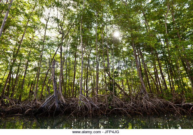 Mangrove forest at Coilba island national park, Pacific ocean, Veraguas province, Republic of Panama. - Stock-Bilder