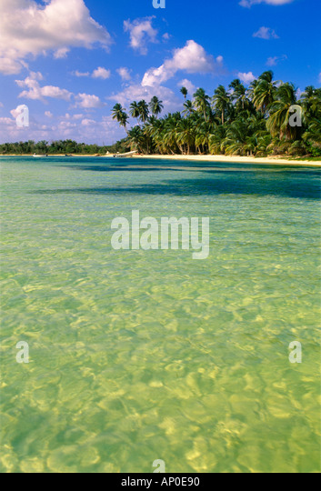 Beautiful water with a nice white sand beach and Palm Trees in the Dominican Republic - Stock Image