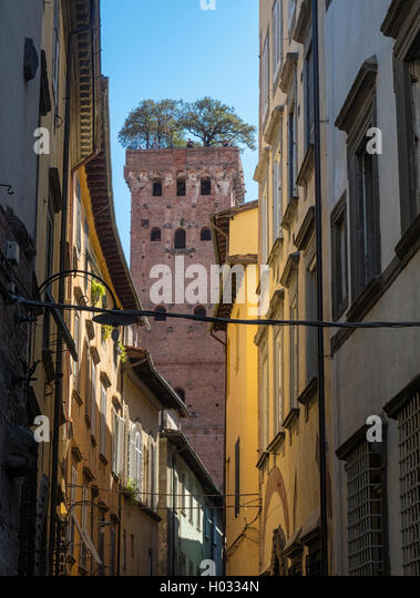 Medieval Guinigi Tower, topped by holm-oak trees, from Via Sant'Andrea in Lucca, Tuscany, Italy - Stock Image