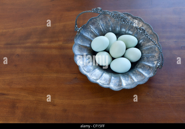 Group of  Araucanian eggs,  breed of chickens from south america, chile, which are rumpless - Stock Image
