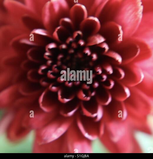 Red Flower - Stock-Bilder