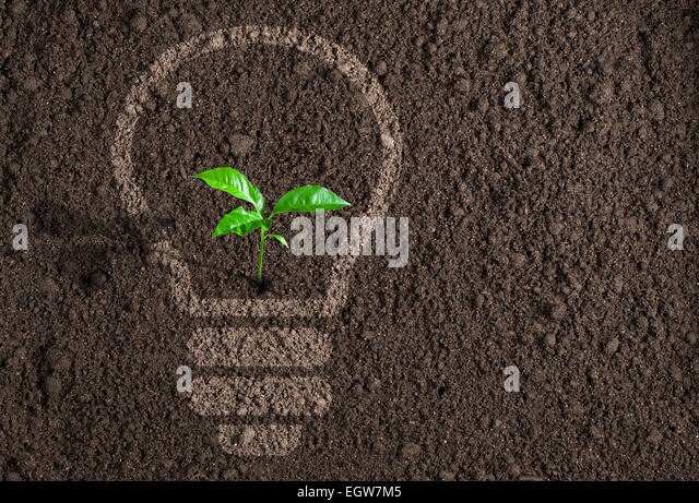 Green plant in light bulb silhouette on soil background - Stock Image