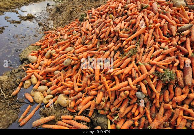 Food wastage - Stock Image